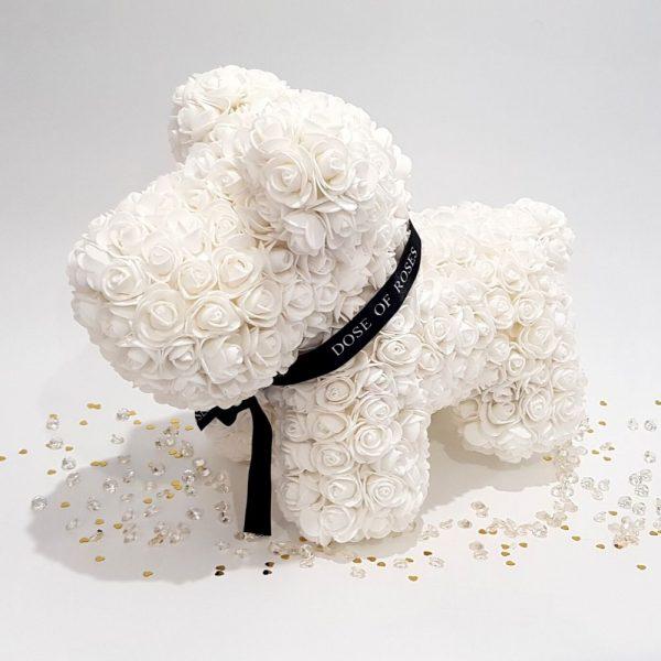 Ivory rose dog with ribbon