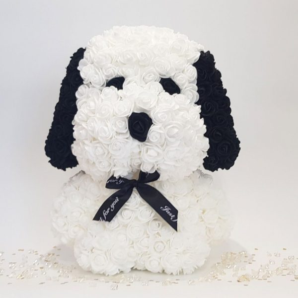White rose dog with ears front